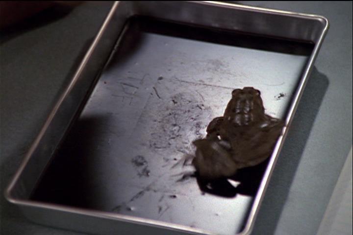 sabrina-001-36-frog-alive
