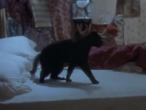 sabrina-movie-008-salem
