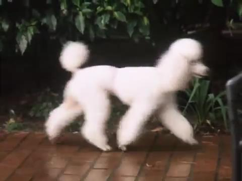 sabrina-movie-174-dog