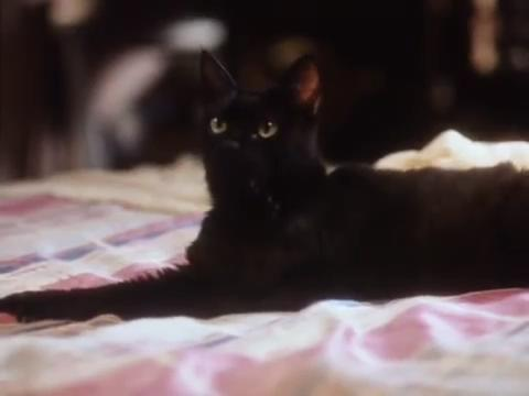 sabrina-movie-237-salem-bed