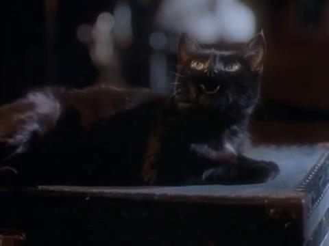 sabrina-movie-409-salem-approves