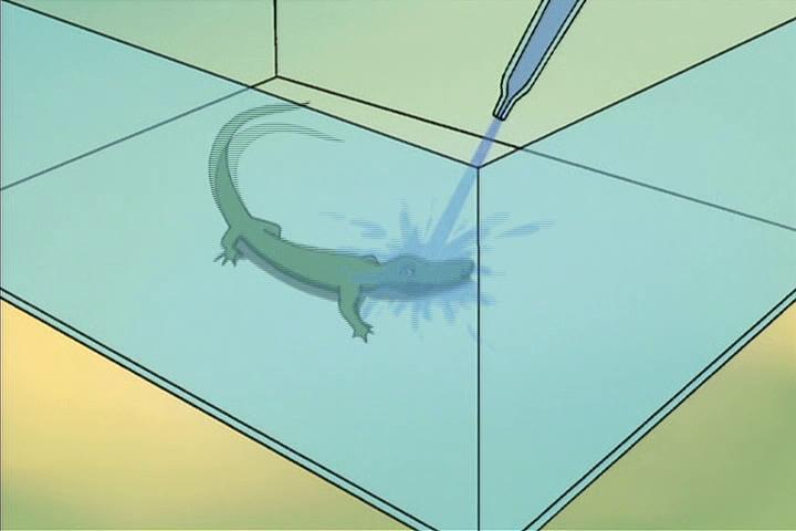 AWM-04-Invisible-Archie-24-reptile-formula