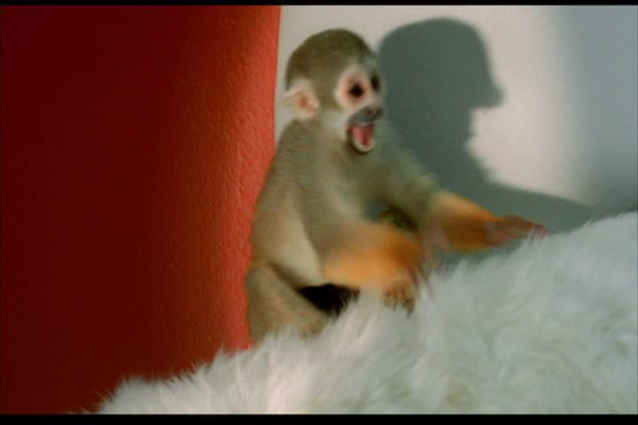 Josie-film-037-monkey