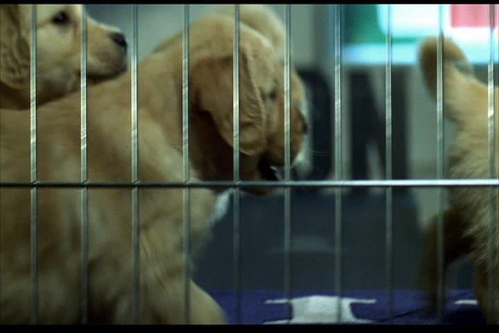 Josie-film-423-puppies
